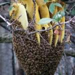api e favo produttore