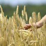 dieta mediterranea grano
