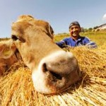 latte nobile e allevatore