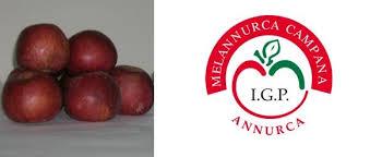 mela caserta logo