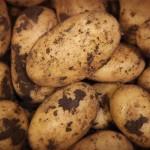 patate campane