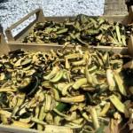 pietro parisi e zucchine essiccate
