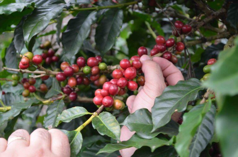 Con Godina e Illiano i giovani Y20 elaborano proposte sul caffè per il G20